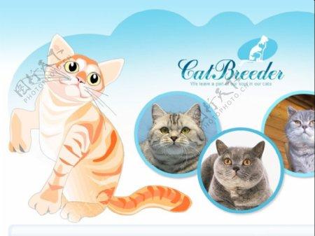 猫星人网站flash网站模板
