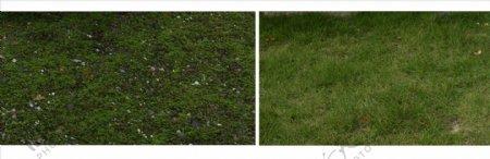 绿色草地psd花卉素材