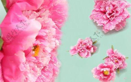 大花朵背景图片