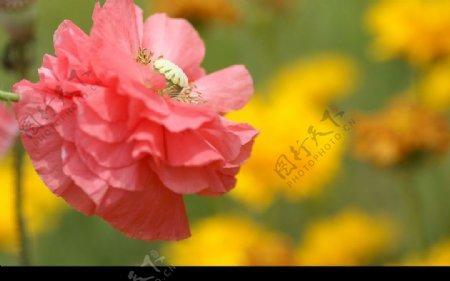 摄影图库自然风景图片