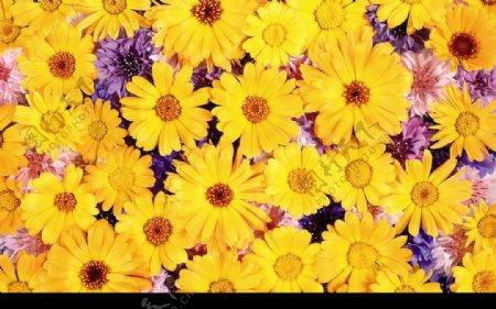 花底纹背景25图片