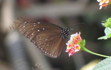 蝴蝶昆虫生物世界摄影图库图片