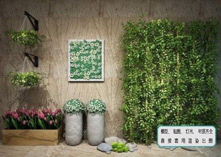 植物墙藤蔓花艺植物生态