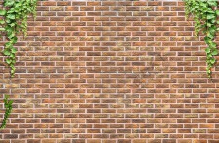砖墙爬山虎