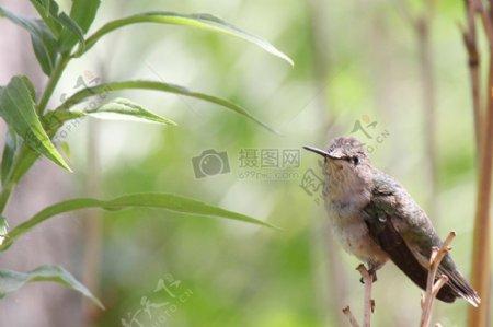 树枝上的小鸟儿