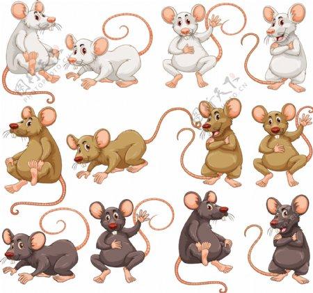 不同毛皮颜色的鼠标