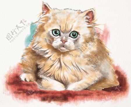 猫家禽家畜动物插图25