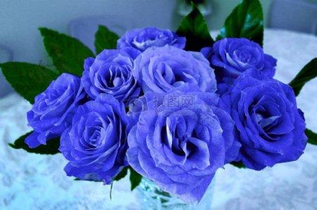 一束漂亮的蓝玫瑰