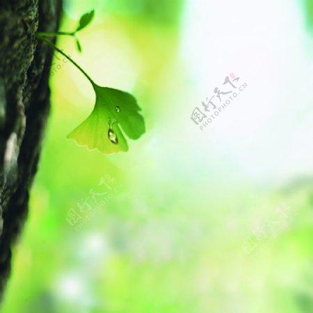 绿色植物主图