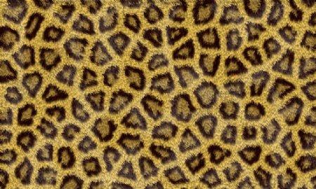 豹纹斑点斑马条纹动物皮毛皮草纹理PS笔刷图片素材