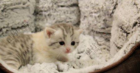 可爱可爱小猫