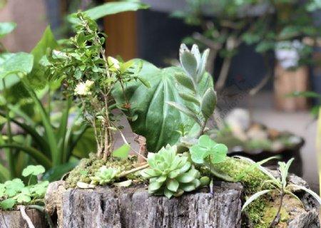 自种微型园林景观