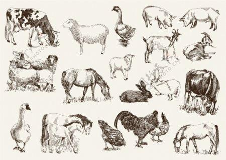 矢量钢笔画手绘动物