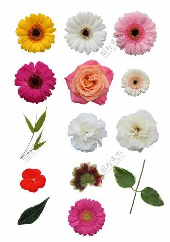 各种分层花朵