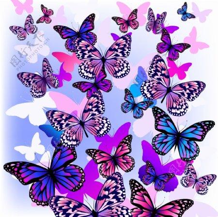 紫蓝色蝴蝶