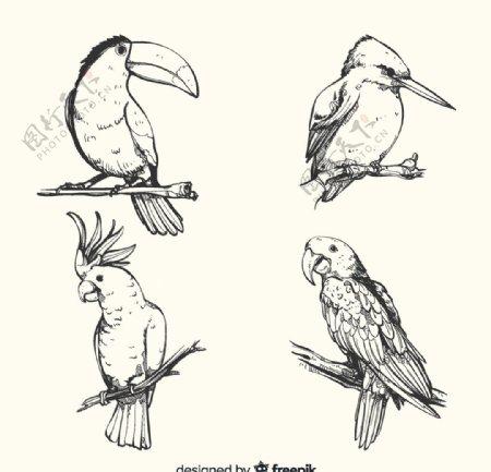 4款手绘鸟类设计