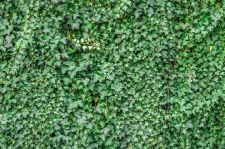 藤蔓绿草底纹背景