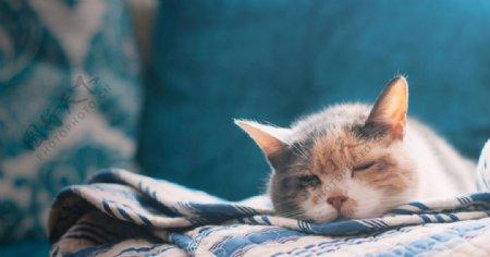 宠物动物合集猫咪睡觉
