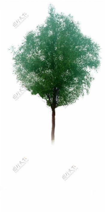 PS素材树