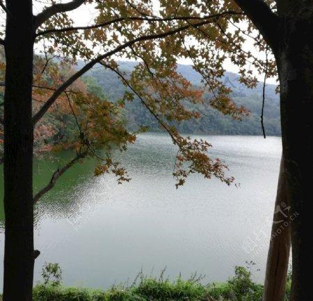 湖泊枫树风景