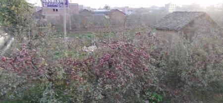 苹果树林小屋风景图片