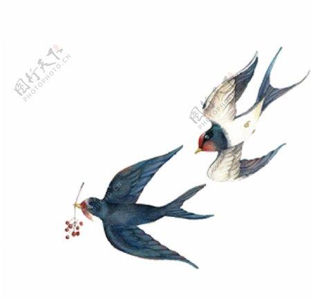白底燕子图片