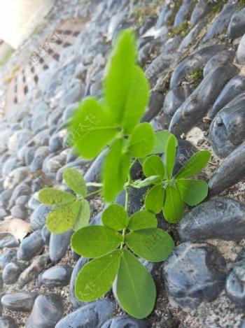 鹅卵石上绿色植物图片