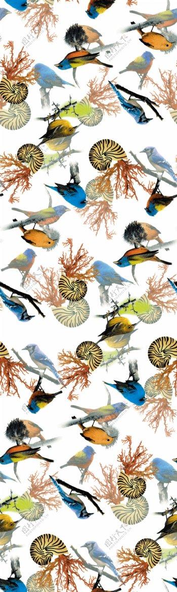 鸟珊瑚图片