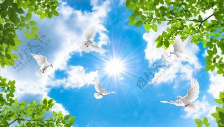 树叶鸽子阳光蓝天吊顶图片