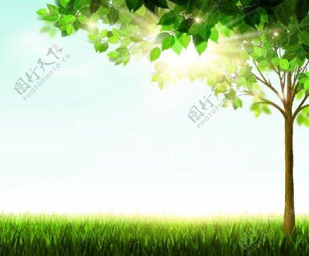 森林大树图片