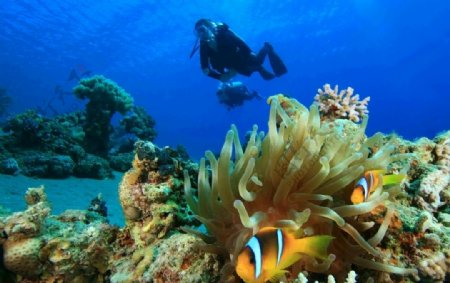 海底珊瑚图片