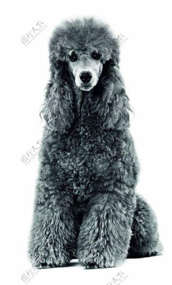 免扣狗狗宠物狗图片