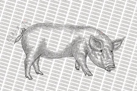 素描猪图片