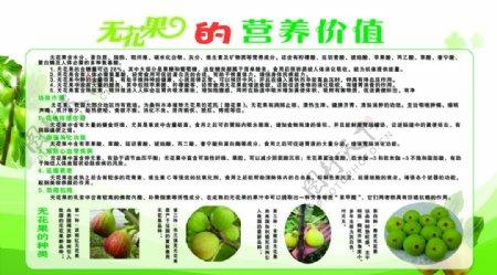 无花果的营养价值展板psd分层图片