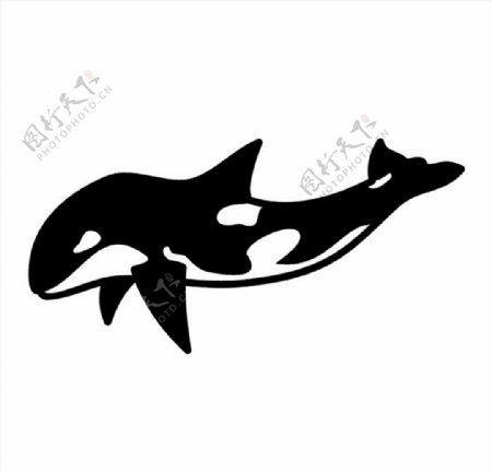 海豚CDR矢量图图片