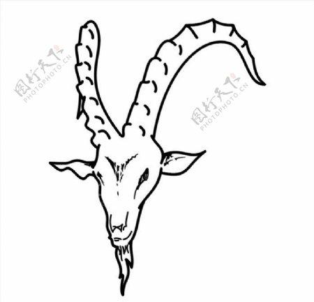 山羊头CDR矢量图图片