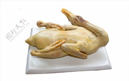 高清熟鸭南乡鸭清水鸭图片