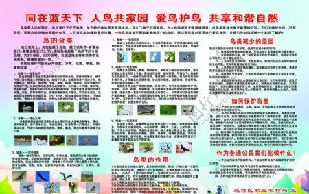 保护鸟类展板PSD分层图片