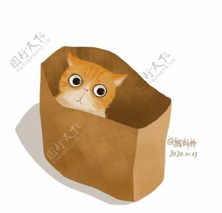 躲猫猫的猫图片