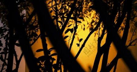 树木剪影光艺术图片