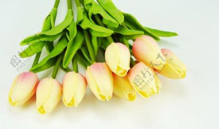 白色地板上的黄色郁金香图片