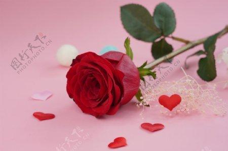 妖艳红色玫瑰花图片