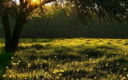 春季日出景观图片