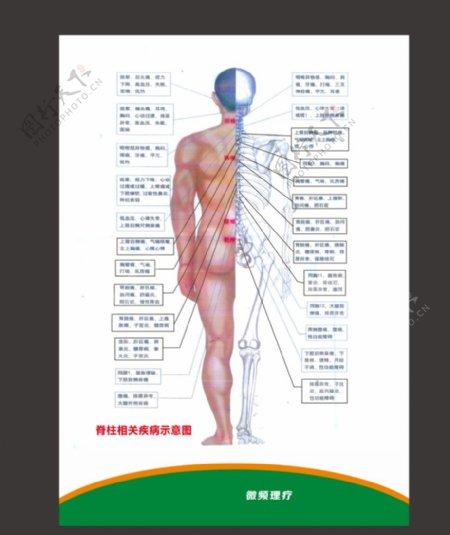 人体脊柱图片