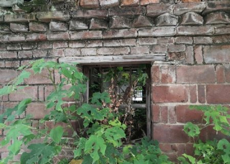 长草了的老房子图片