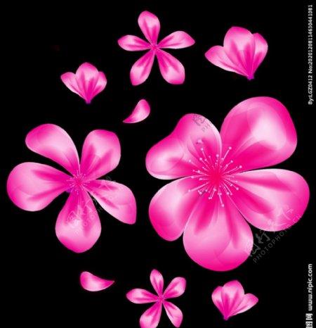 花花瓣花朵图片