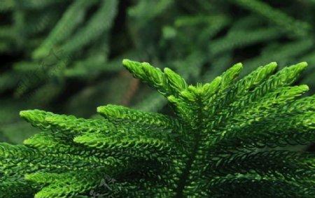 温室风景图片