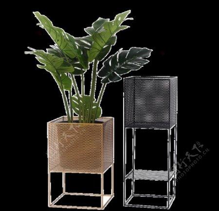 盆栽植物绿色叶子图片