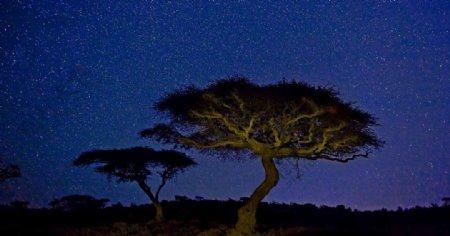 迎客松树木夜景图片