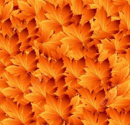 黄色叶子图片